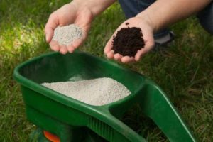 Гранулы органического удобрения в зеленой емкости и руке